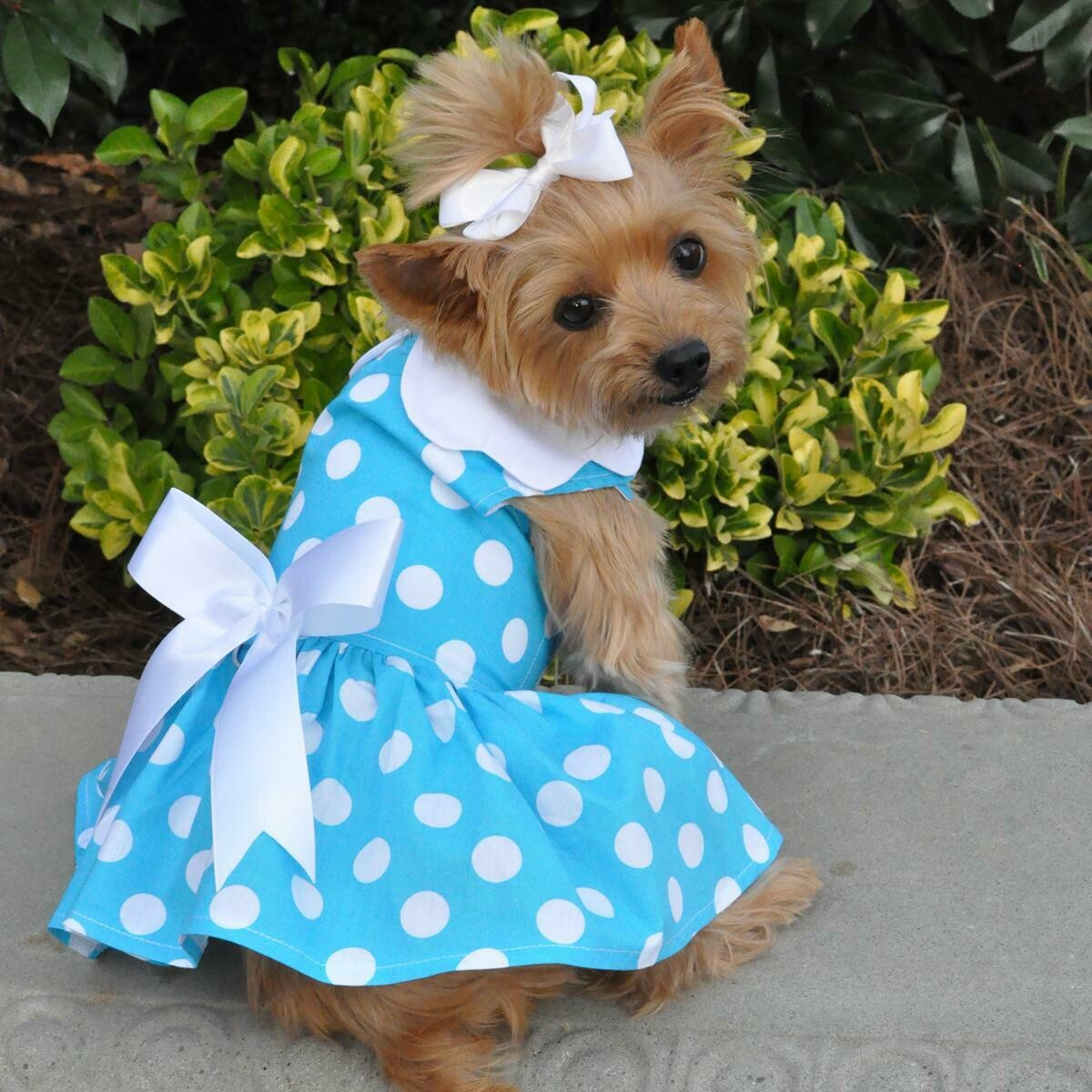 Blue Polka Dot Dog Dress with Leash