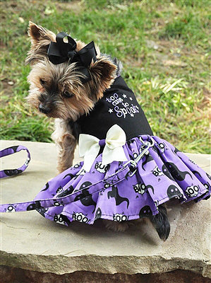 """Too Cute to Spook"" Dress"