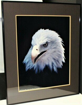 Phil Sonier Bald Eagle American Spirit Nature Portrait Moments #144/250, Signed