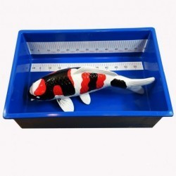 SMALL KOI MEASURING TUB