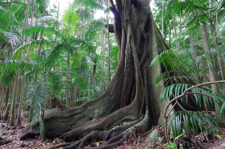 世界自然遺産 スプリングブルックの奇跡