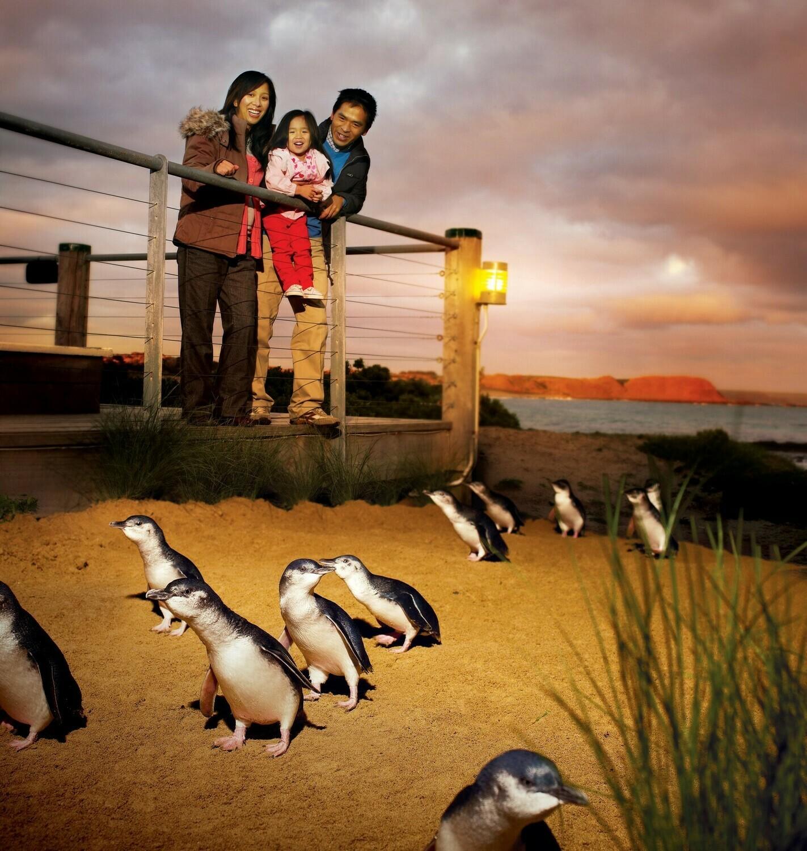 ペンギンパレードと 動物ふれあいの旅