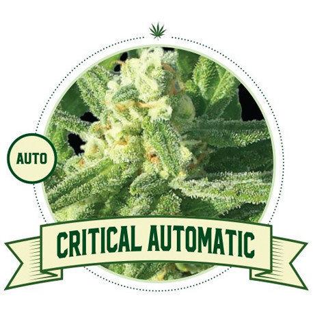 Critical Automatic