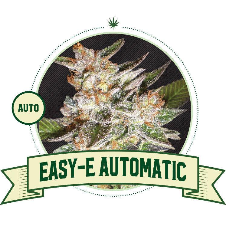 Easy-E Automatic