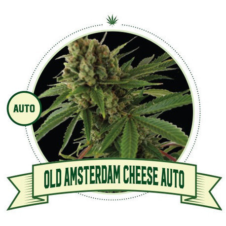 Old Amsterdam Cheese Automatic