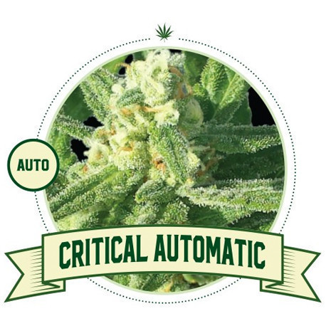 Critical Automatic