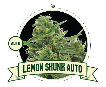 LEMON SKUNK AUTOMATIC