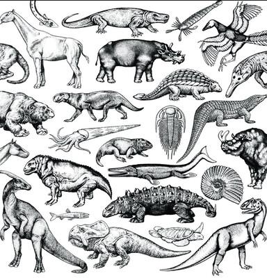 Moschops - Skratch Fossils 12