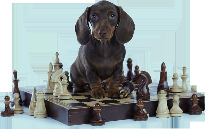 "Develops your Dog's ""Hidden Intelligence"""