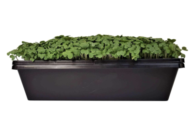 Green & Blue BOX - Sustainable Eco-Systems - Microgreens for Tampa Bay