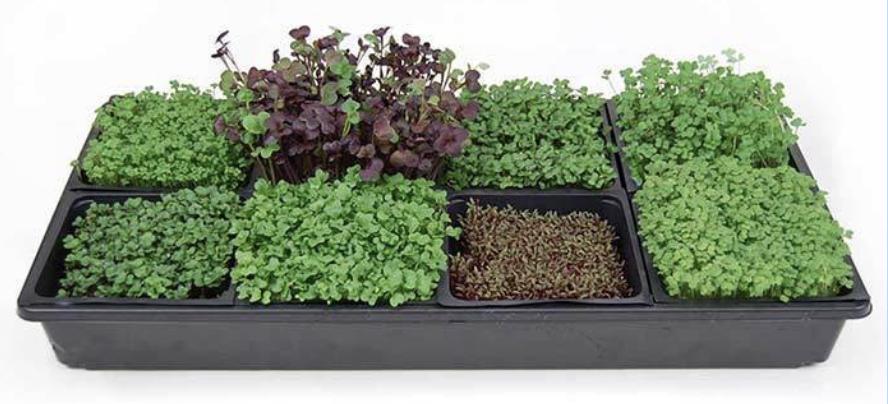 Tray of Microgreens 5X5
