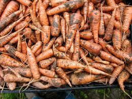 Carrot washed 500g