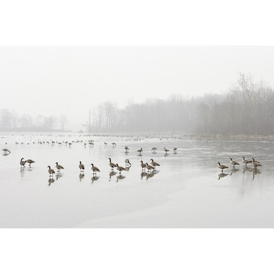 Untitled (Geese on Pond)