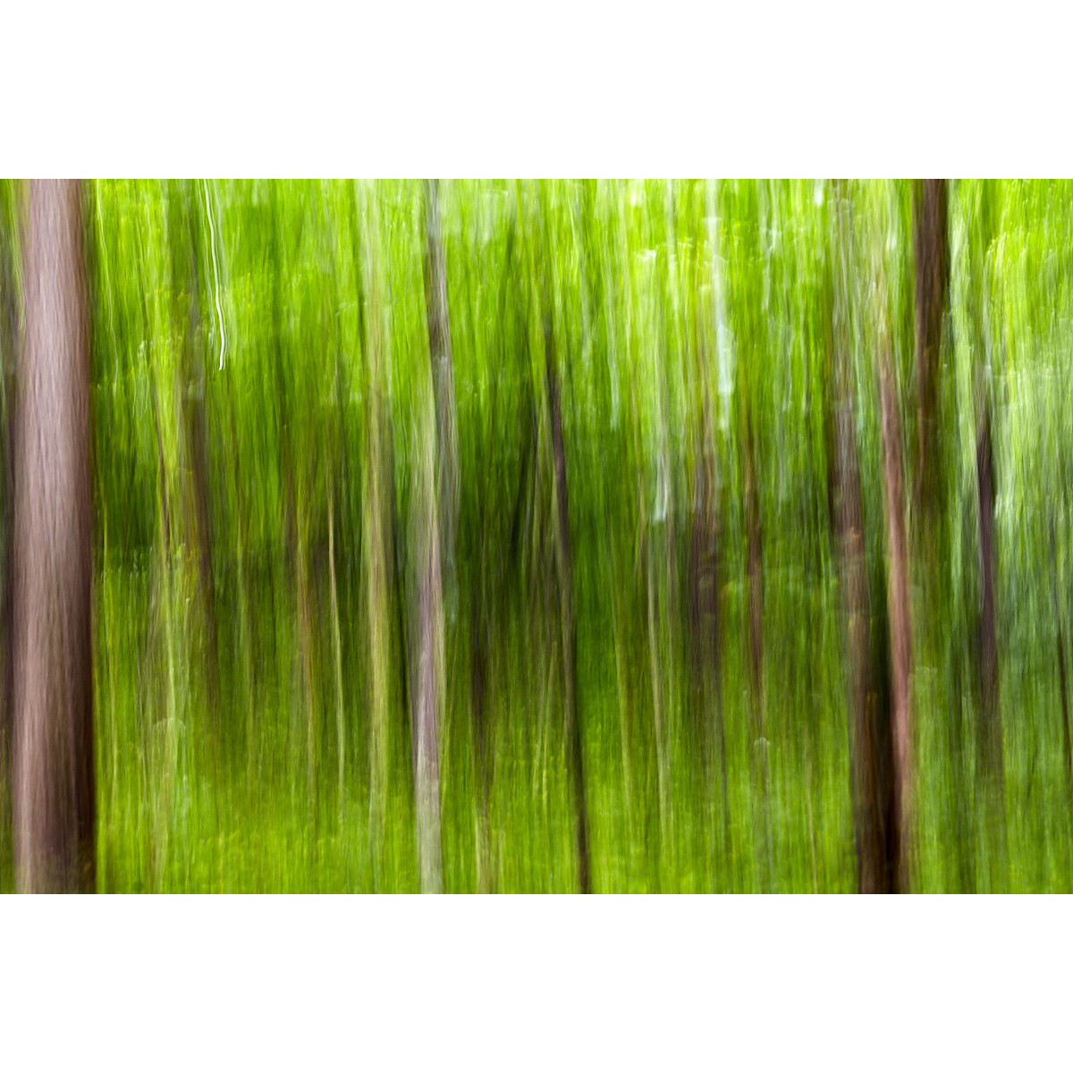 Untitled (Summer Woods)