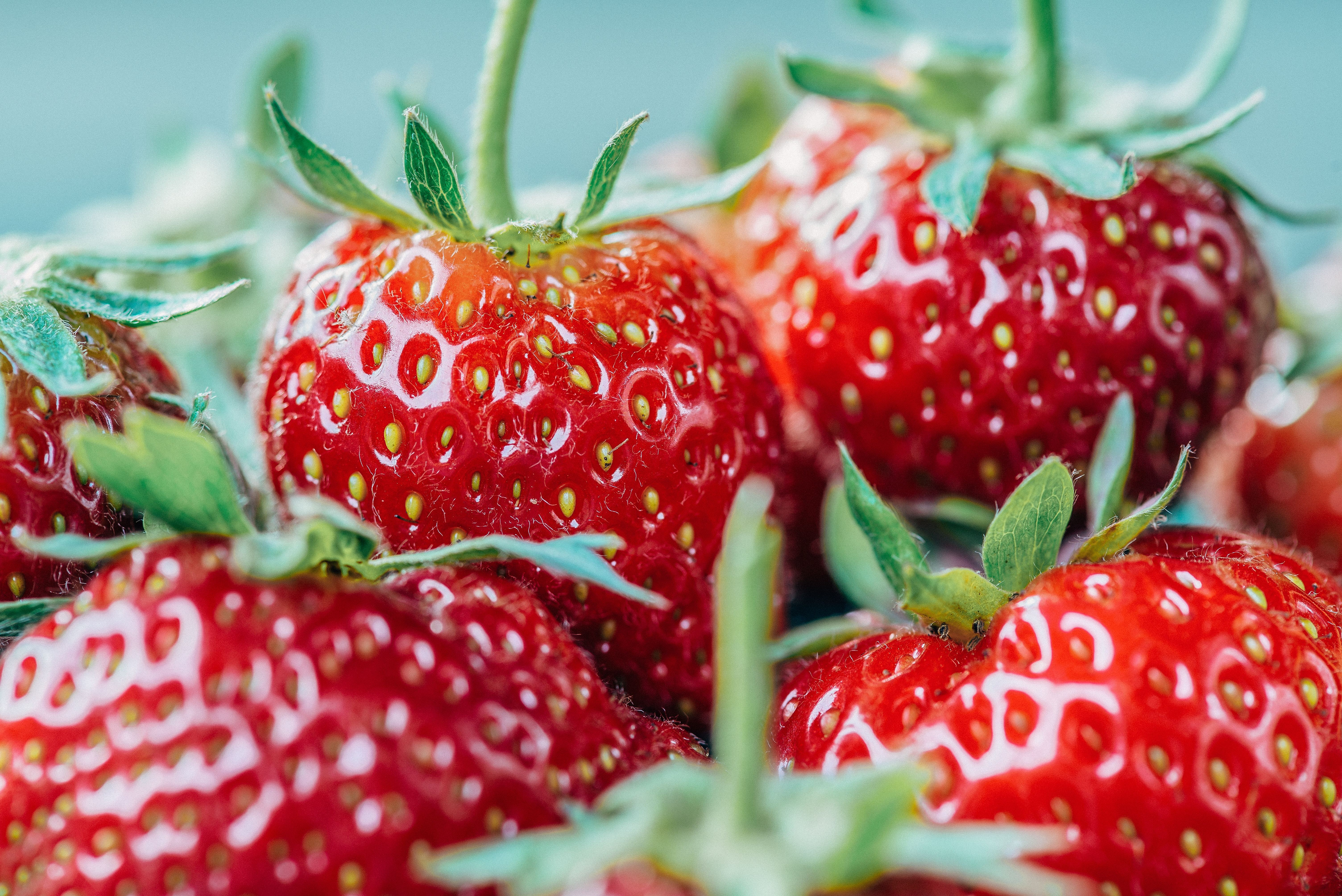 10 Seascape Bare-Root Strawberry Plants Including FREE strawberry planting guide and strawberry mini cookbook SS - 001
