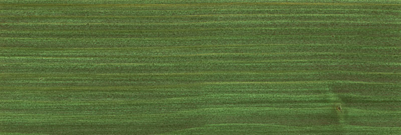 OSMO Holzschutz Öl-Lasur 729 Tannengrün, 750 ml