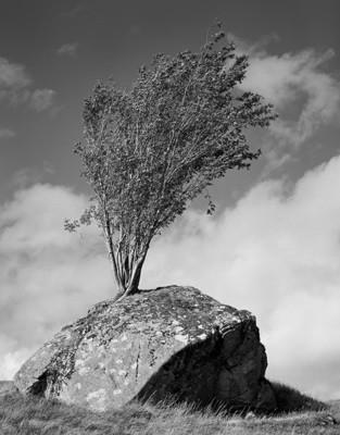 Rock and Tree, Rannoch Moor, Glencoe - Scotland