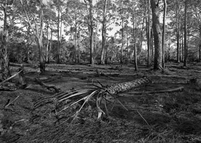 Scorched Earth, Oscar Shearer Park - Florida