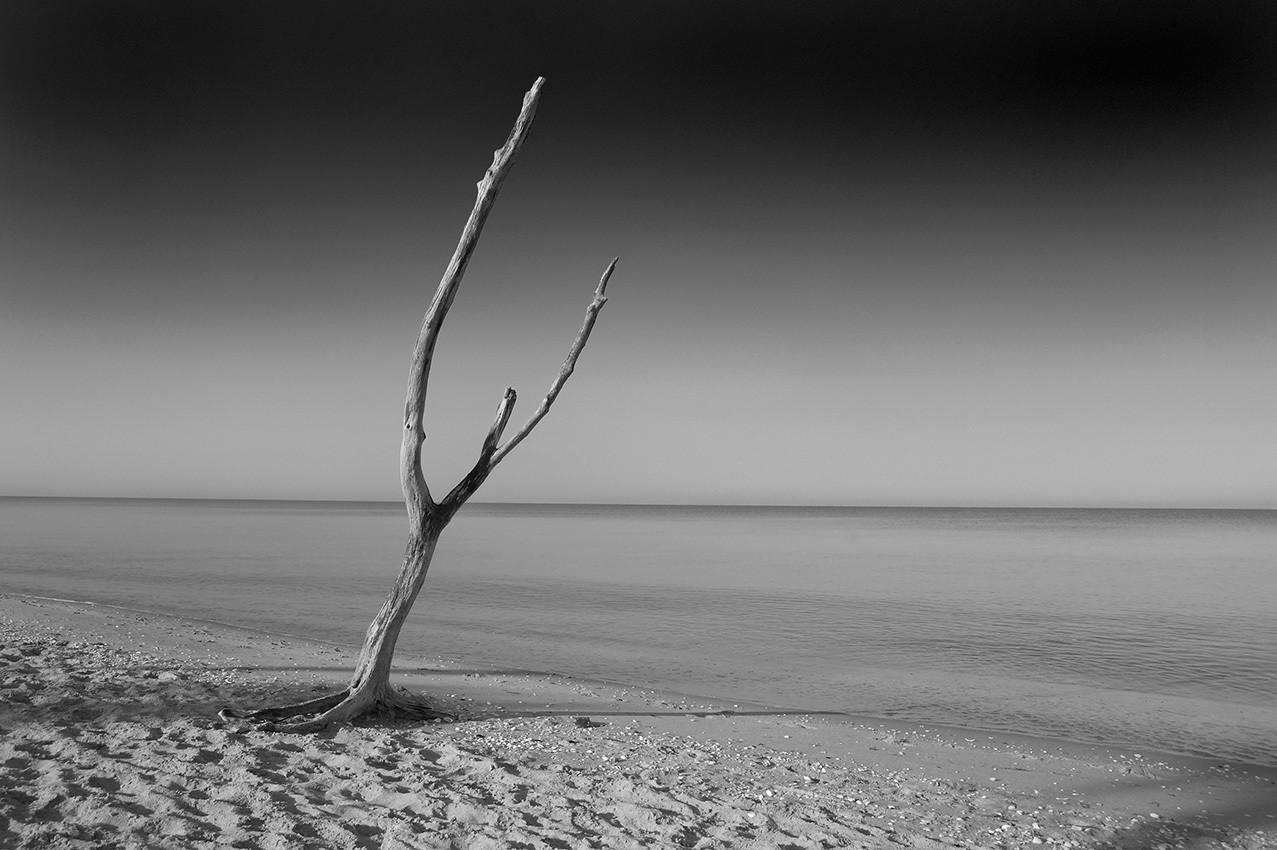 Lone Tree, Englewood Beach, Gulf of Mexico - Florida