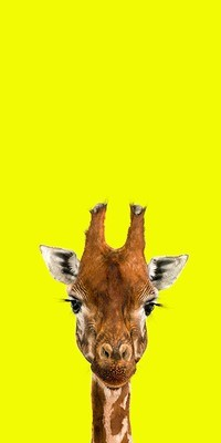 Bella - The Endangered Series, Giraffe