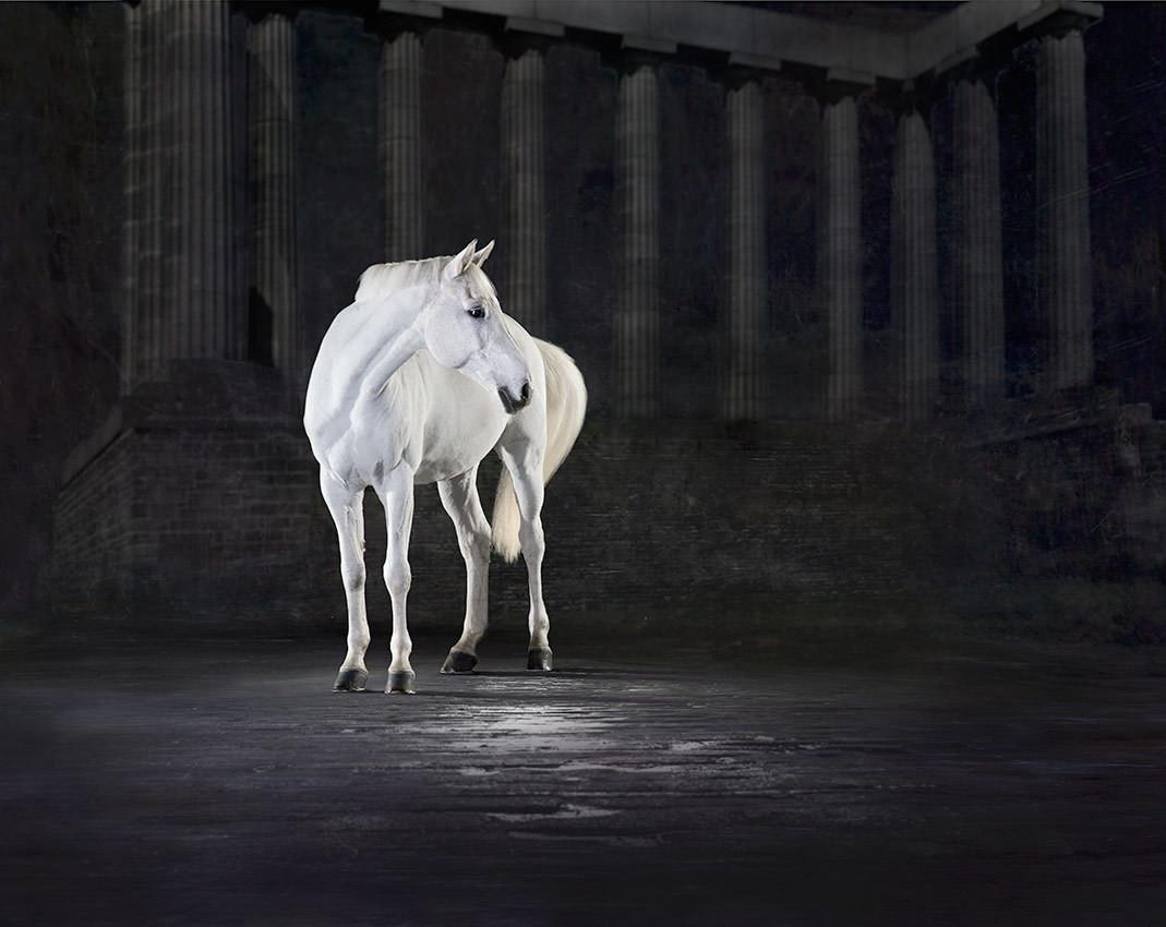 Athena - The Horse Series
