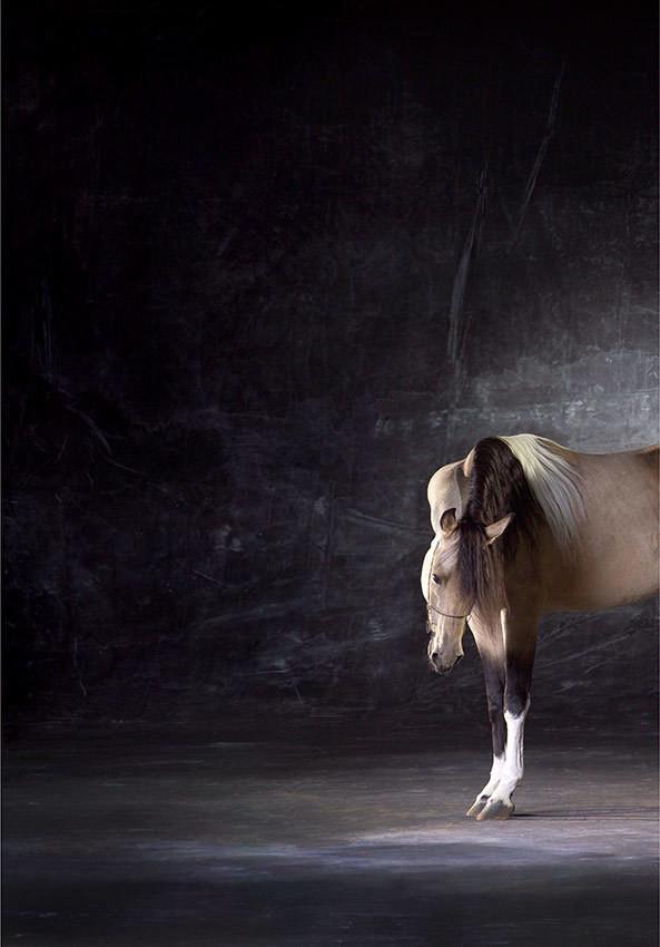 Starbucks - The Horse Series