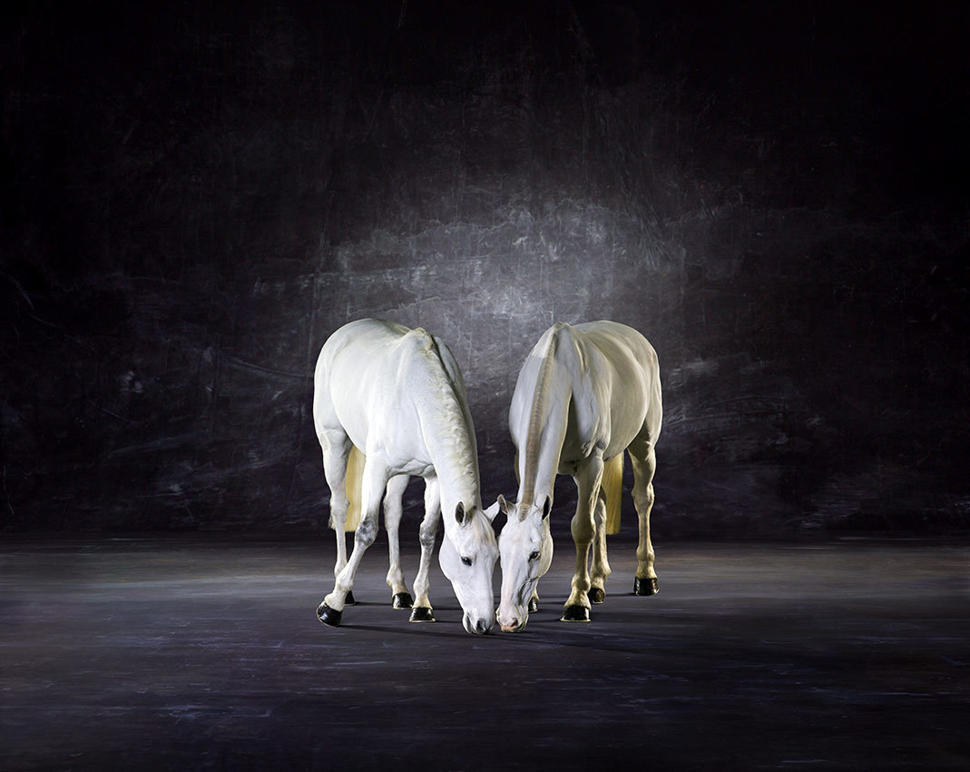 Symmetry l - The Horse Series