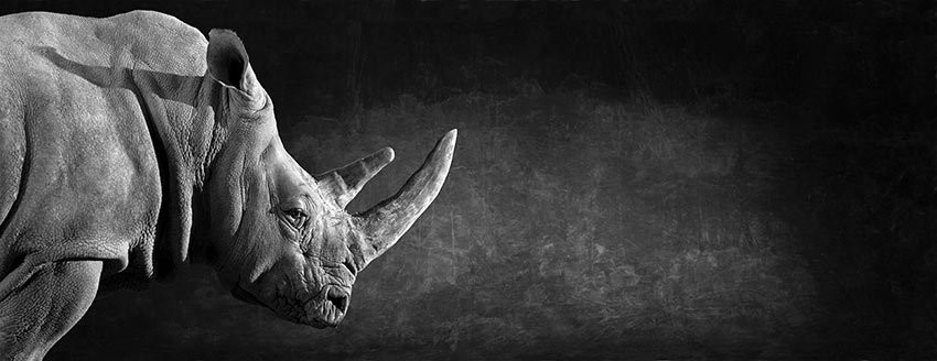 White Rhino - The Endangered Series