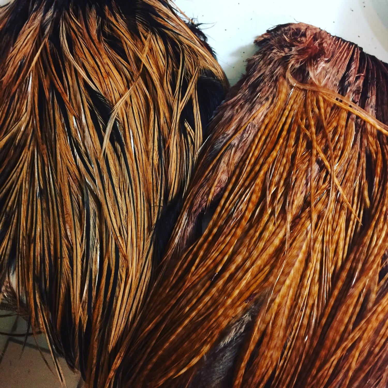 Dyed Barred Ginger Saddle