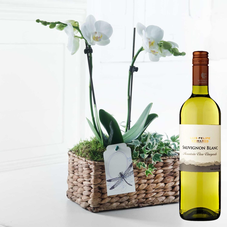 Ορχιδέα και κρασί