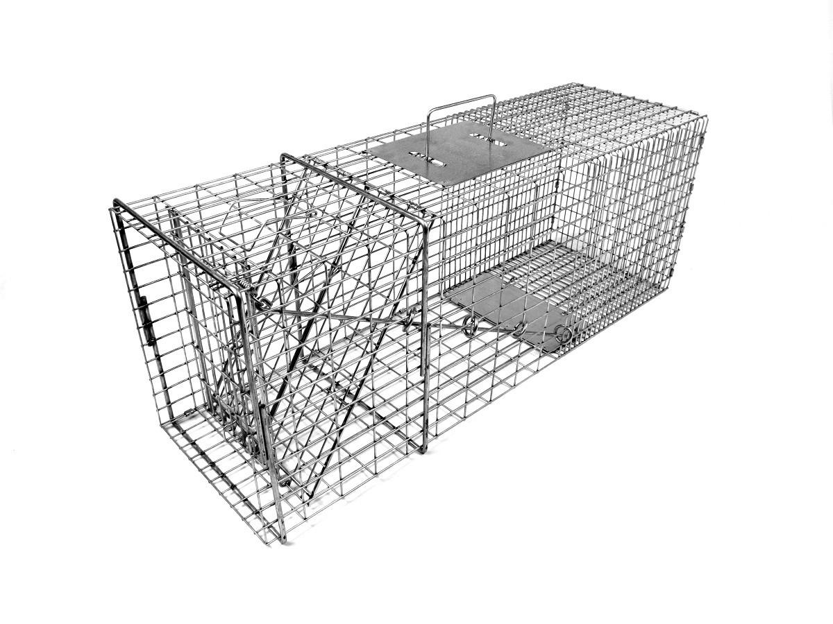 Professional Raccoon Trap