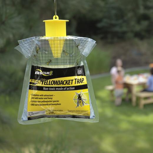 Pheromone Wasp & Yellowjacket Trap