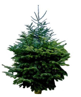 Real Christmas Trees Delivery