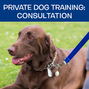 Item 10. Private Dog Training: Consultation 00010
