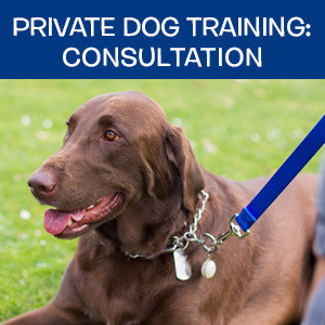 Item 10. Private Dog Training: Consultation