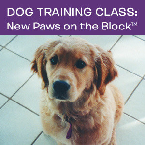 Item 06. Dog Training Class: New Paws on the Block™