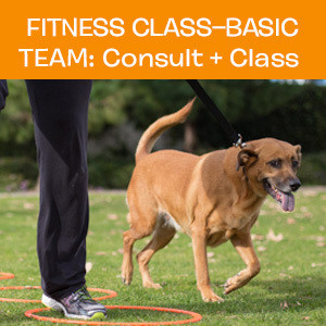 Item 01. Fitness Class – Basic Team: Consult and First Class