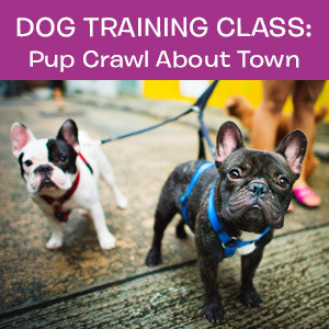Item 08. Dog Training Class: Pup Crawl About Town