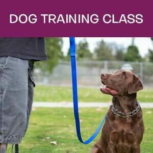 Item 06. Dog Training Class