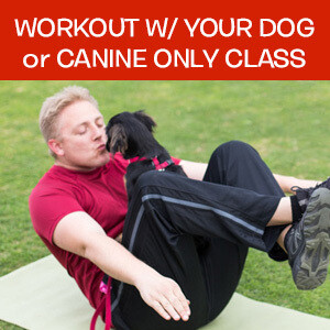 Item 01. Online Workout With Your Dog Or Canine Only Fitness Class