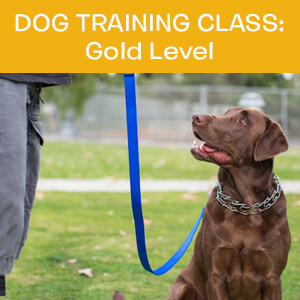 Item 03. Online Dog Obedience Training Class—Gold Level