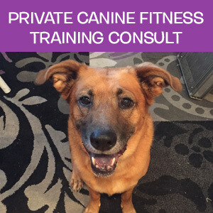 Item 07. Online Private Canine Fitness Training Consultation