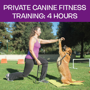 Item 08. Online Private Canine Fitness Training: 4 Hours
