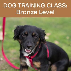 Item 02. Online Dog Obedience Training Class—Bronze Level