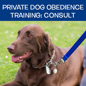 Item 04. Online Private Dog Obedience Training: Consultation