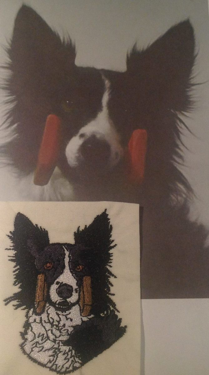 Border Collie Head with Dumbbell