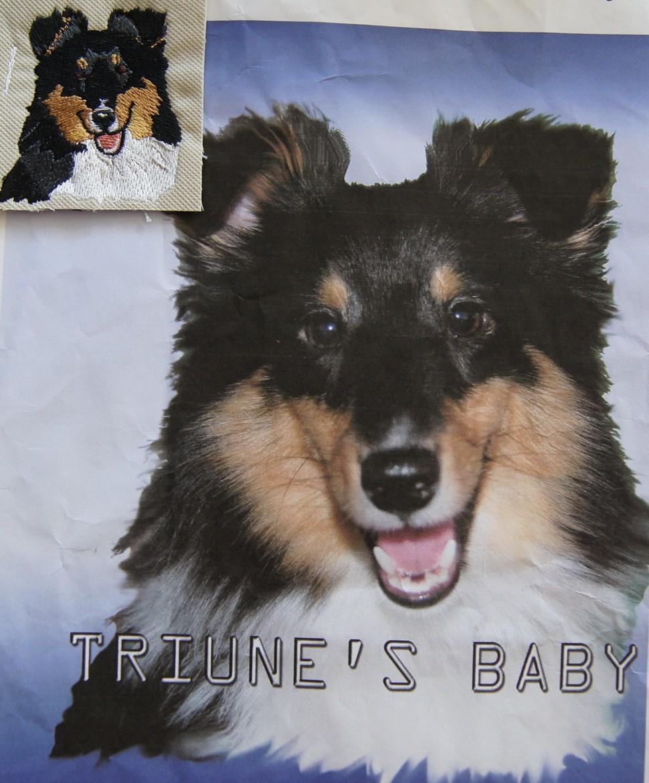 Sheltie   Triune's Baby