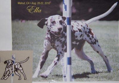Dalmatian  Ella