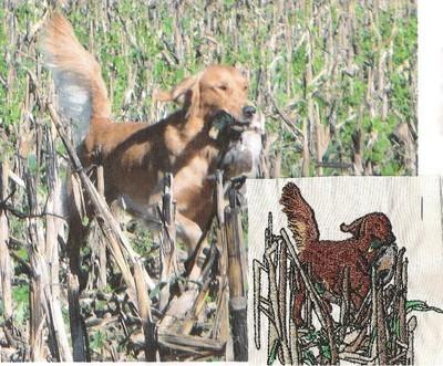 Golden Retriever Hunting 1