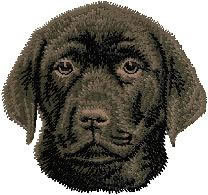 Black Labrador Retriever (puppy) D55